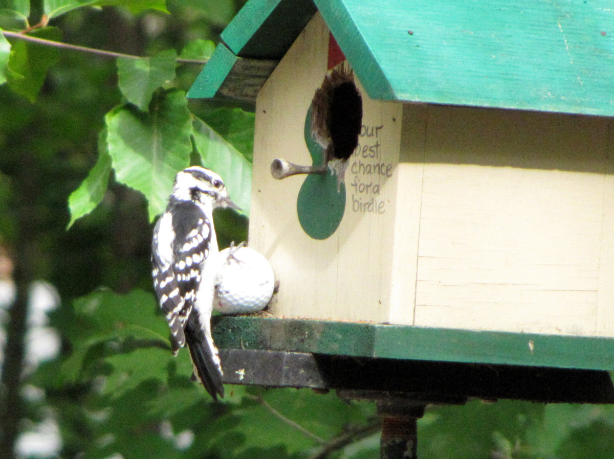 The birdhouse that became a chipmunk home.
