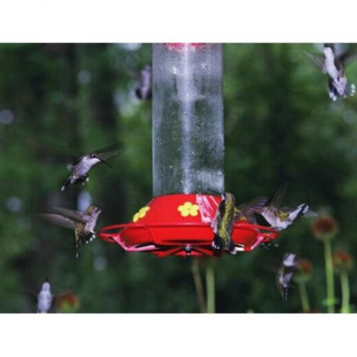 Before Hurricane Katrina, there were thousands on hummingbirds during fall migration in Southeastern Louisiana.