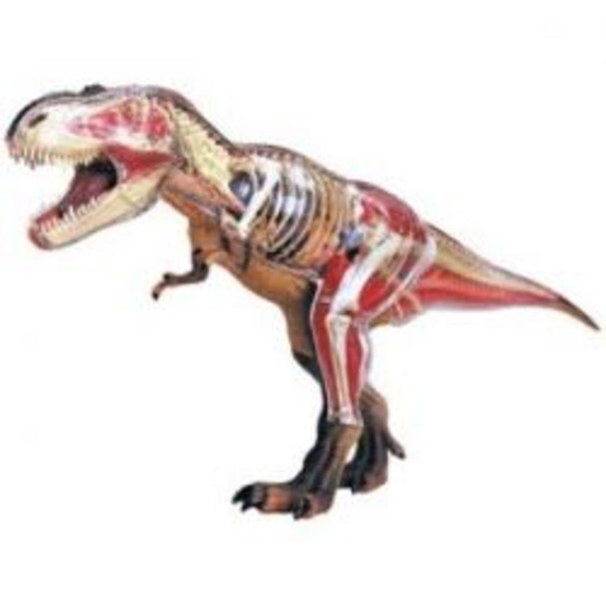 4D Vision Tyrannosaurus Rex Anatomy Model