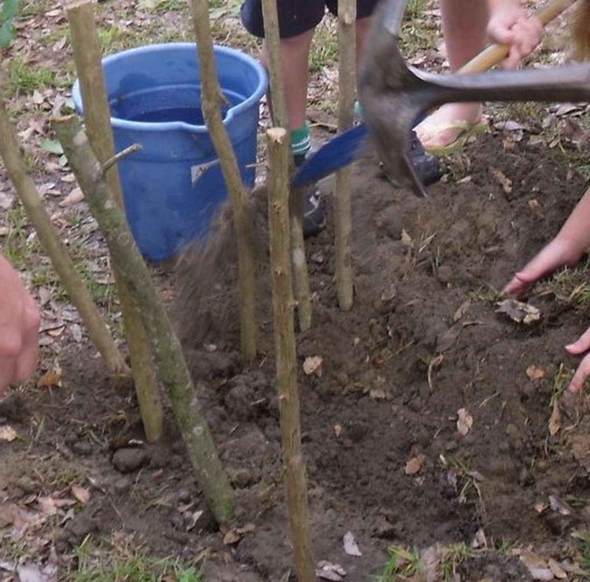 While 1 group held up their sticks on their side, the others scooped up dirt around the main post sticks & packed the dirt.