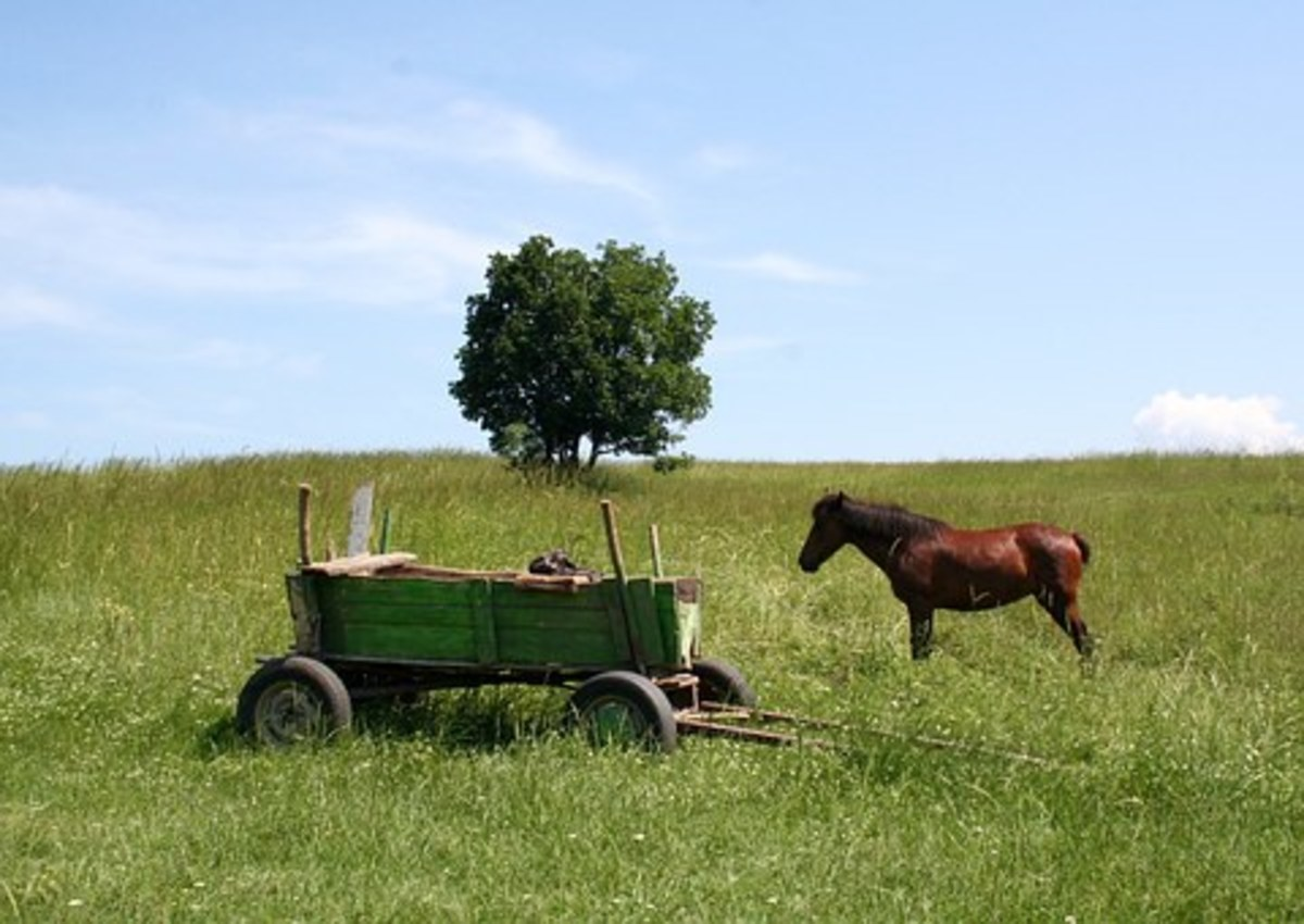 Cart Before The Horse - Idiom