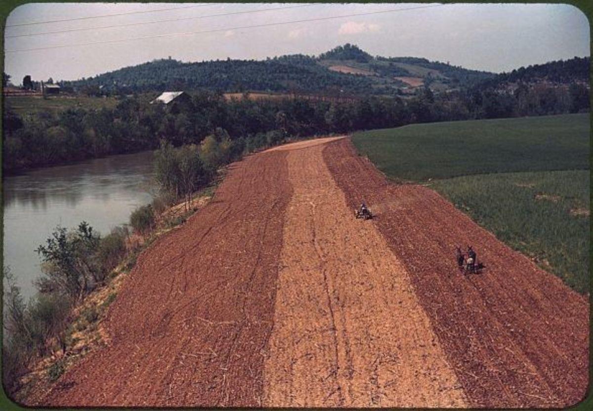 Planting corn on riverside