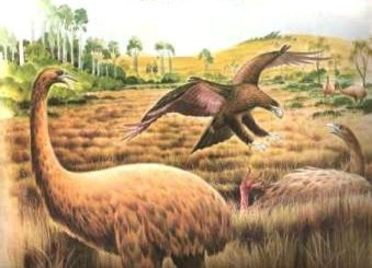 the-largest-animals-that-ever-lived-on-earth