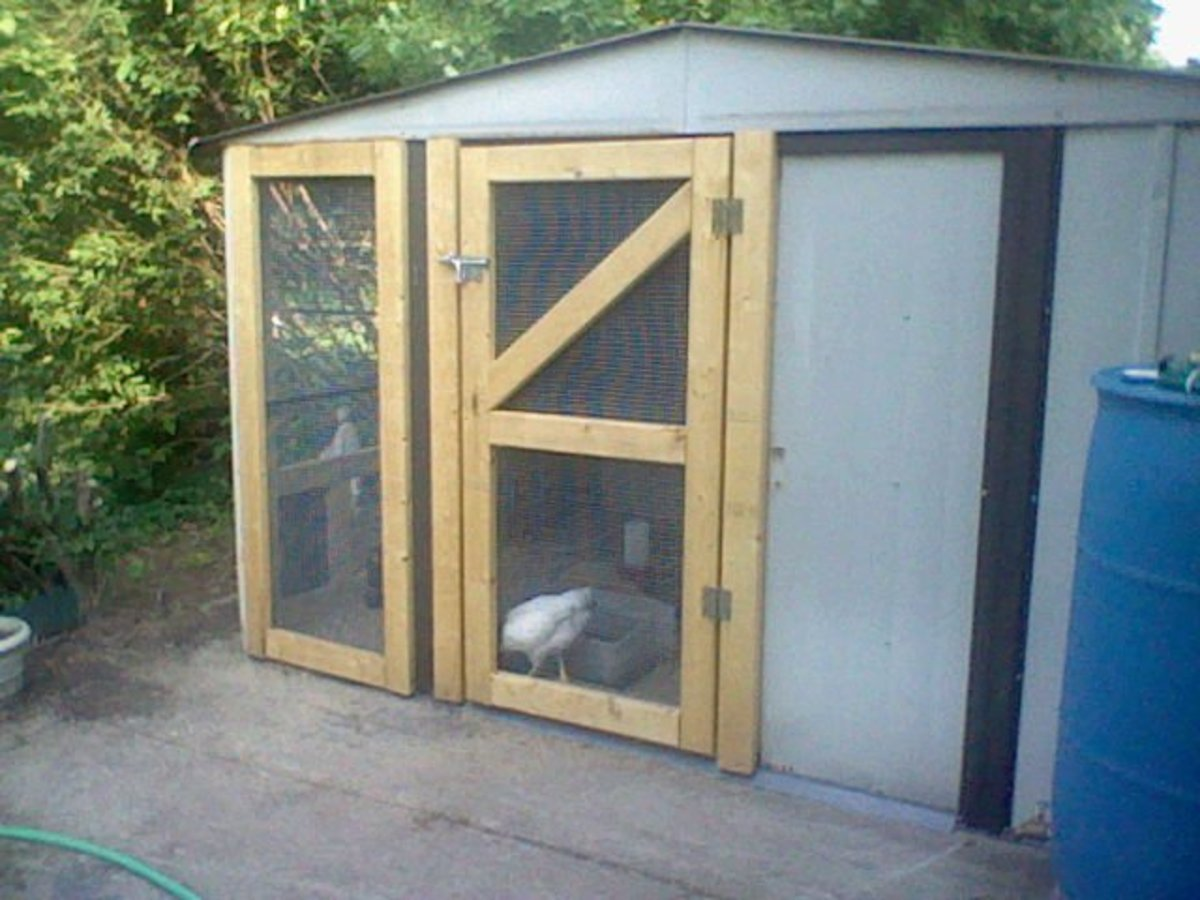 how to build a 60 chicken house safe from animals