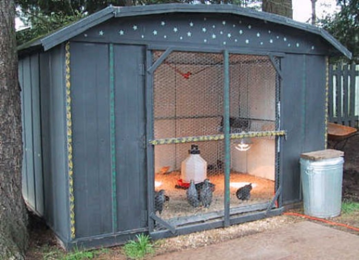 I Love This Coop From the City Chicken Website!