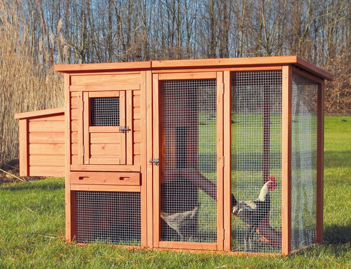 chicken-shed