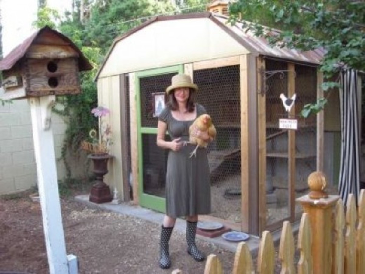 The Shed to Chicken Coop Conversion that Inspired Mine!