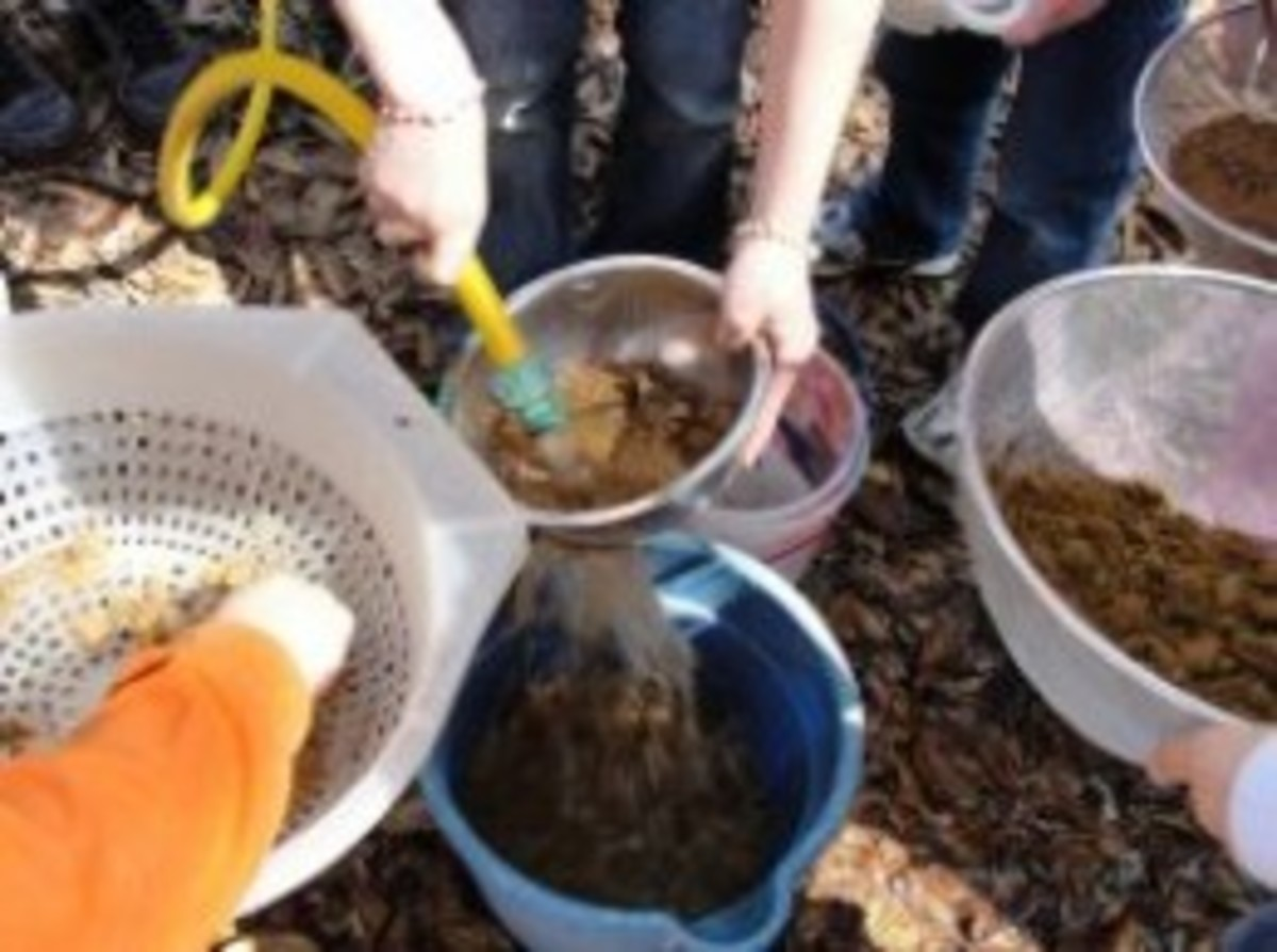 Mining for rocks and minerals using seeded dirt
