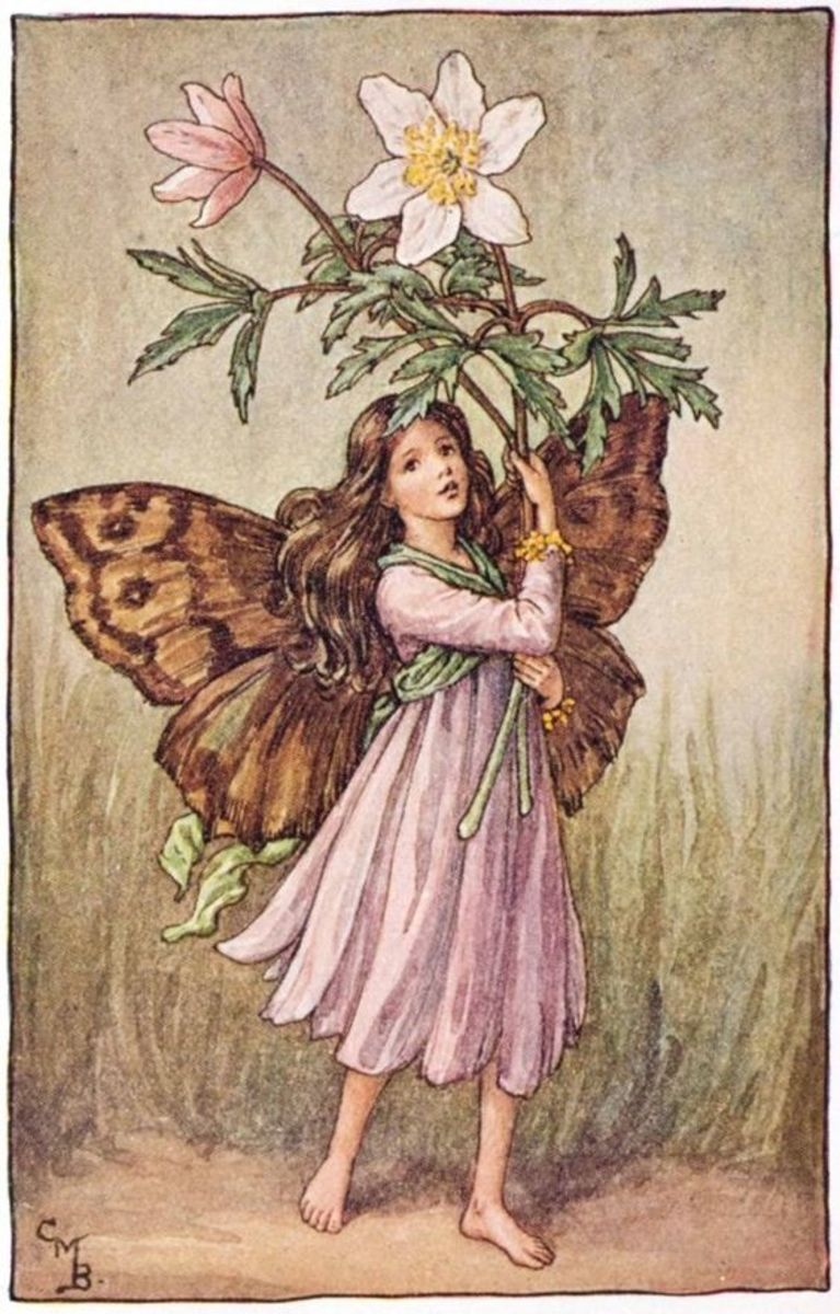 WindflowerFairy by Cicely Mary Barker