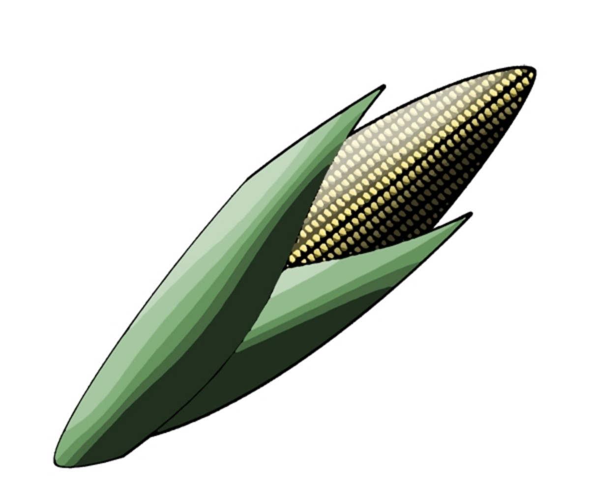Maize / Yellow Corn Clip Art