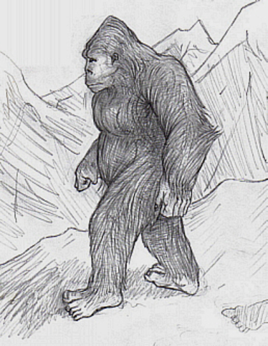 Artist's rendering of a Sasquatch