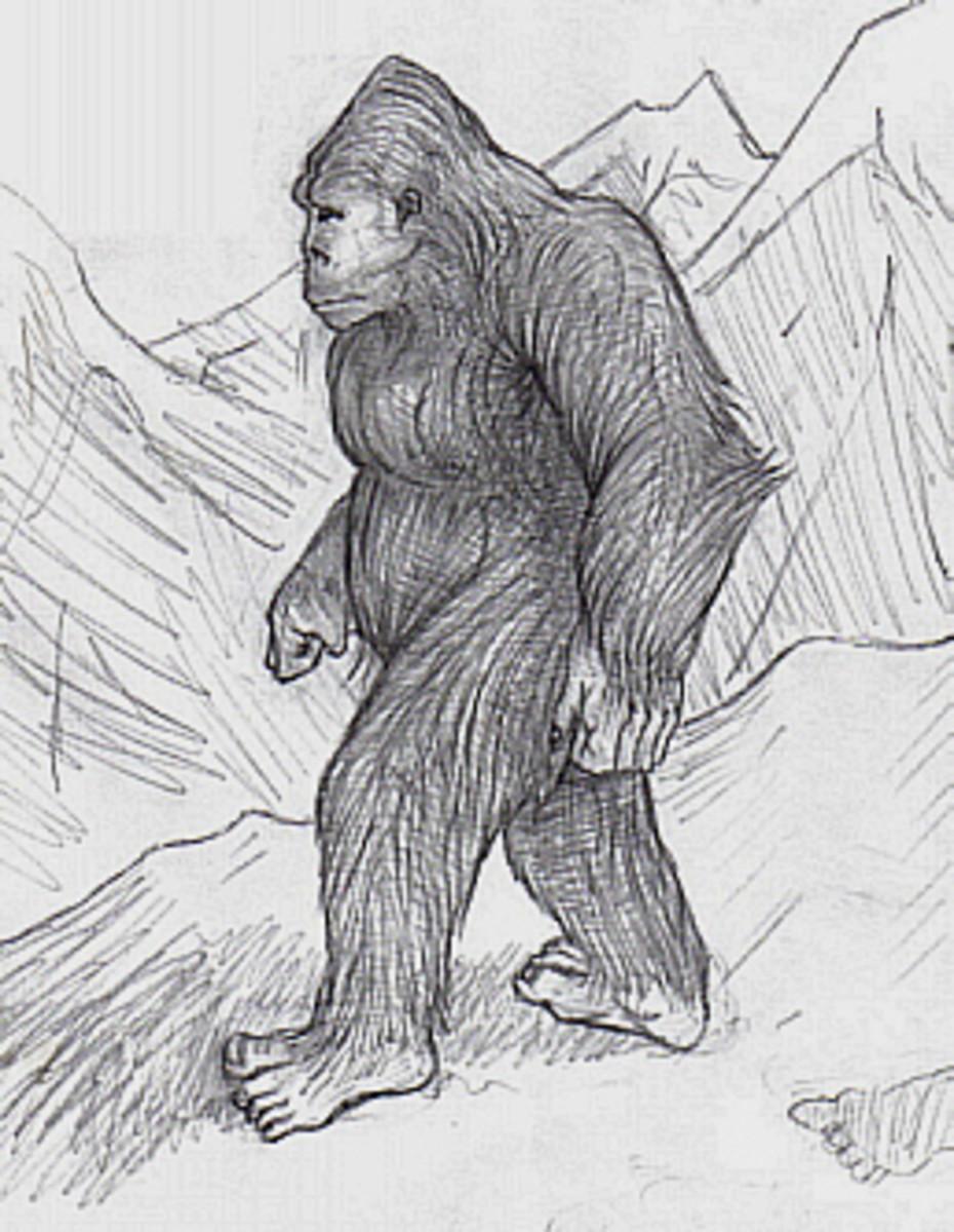Artist's rendering of a Sasquatch