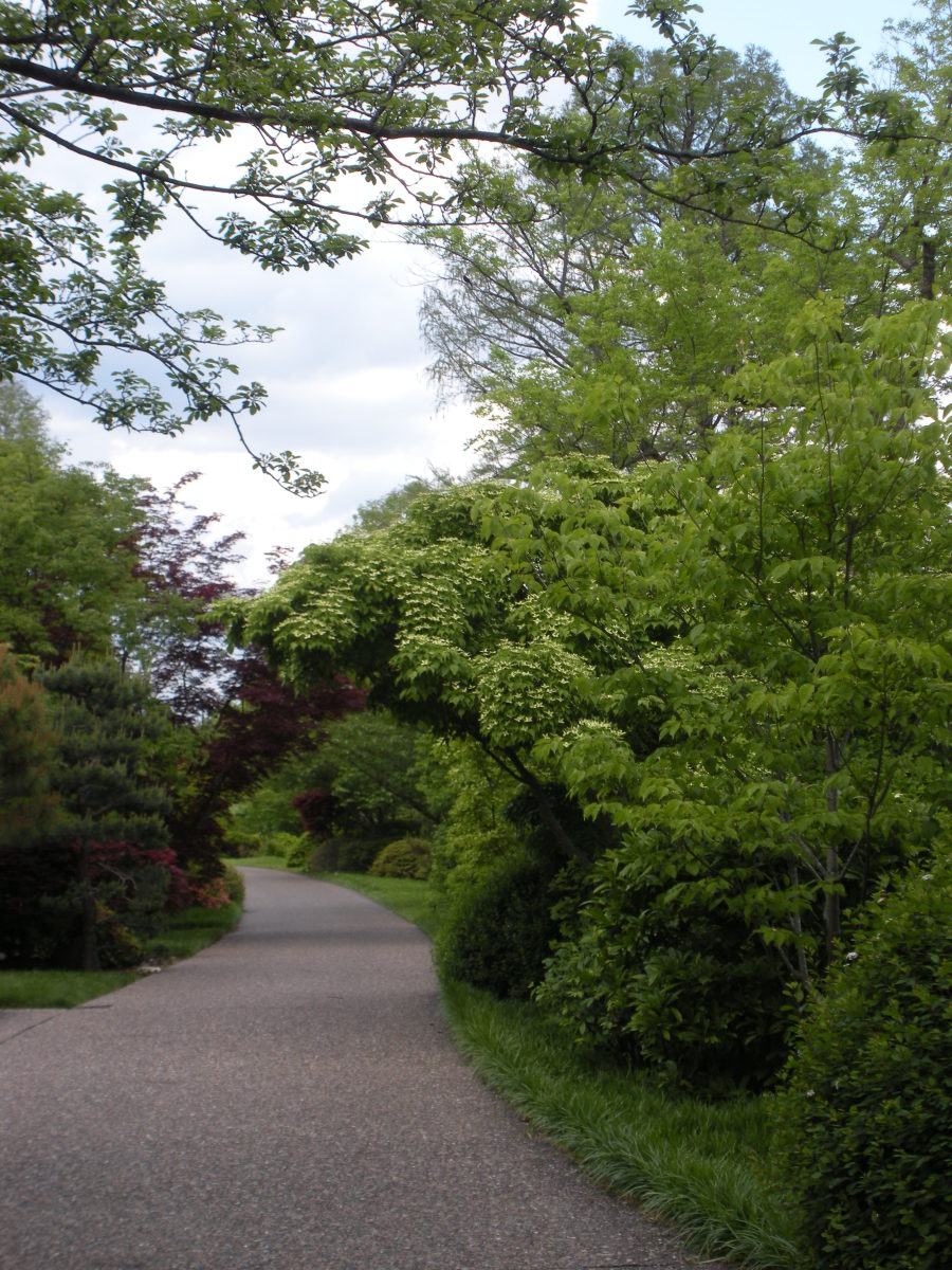 Pathway through a larger garden, going under a bridge of trees and shrubs.