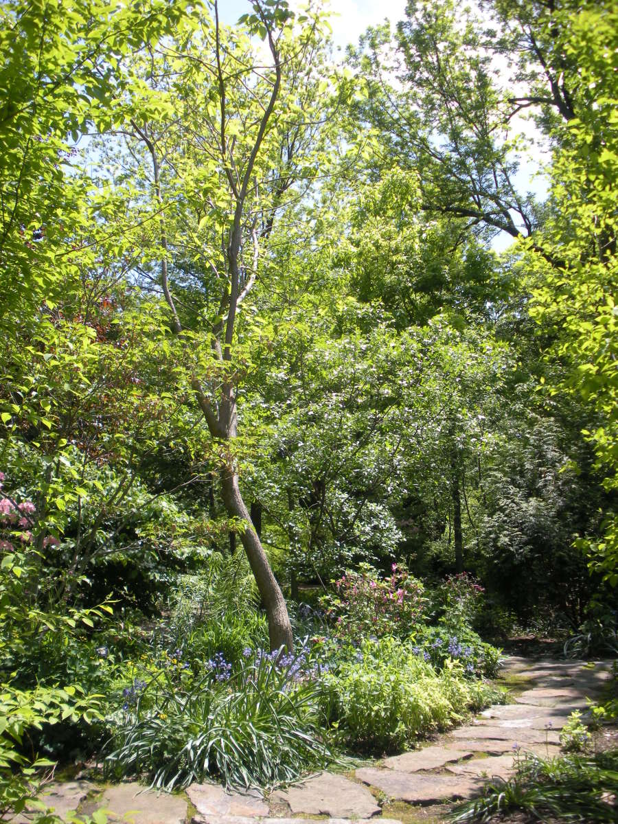 Woodland Gardens - A Gallery of Photos