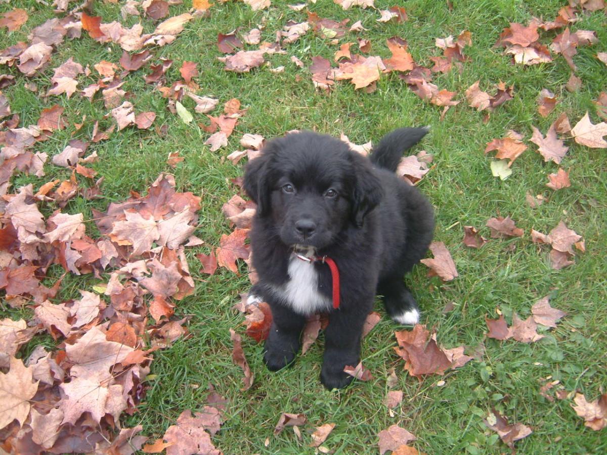 October 2006 Thanksgiving Weekend 7.5 weeks old