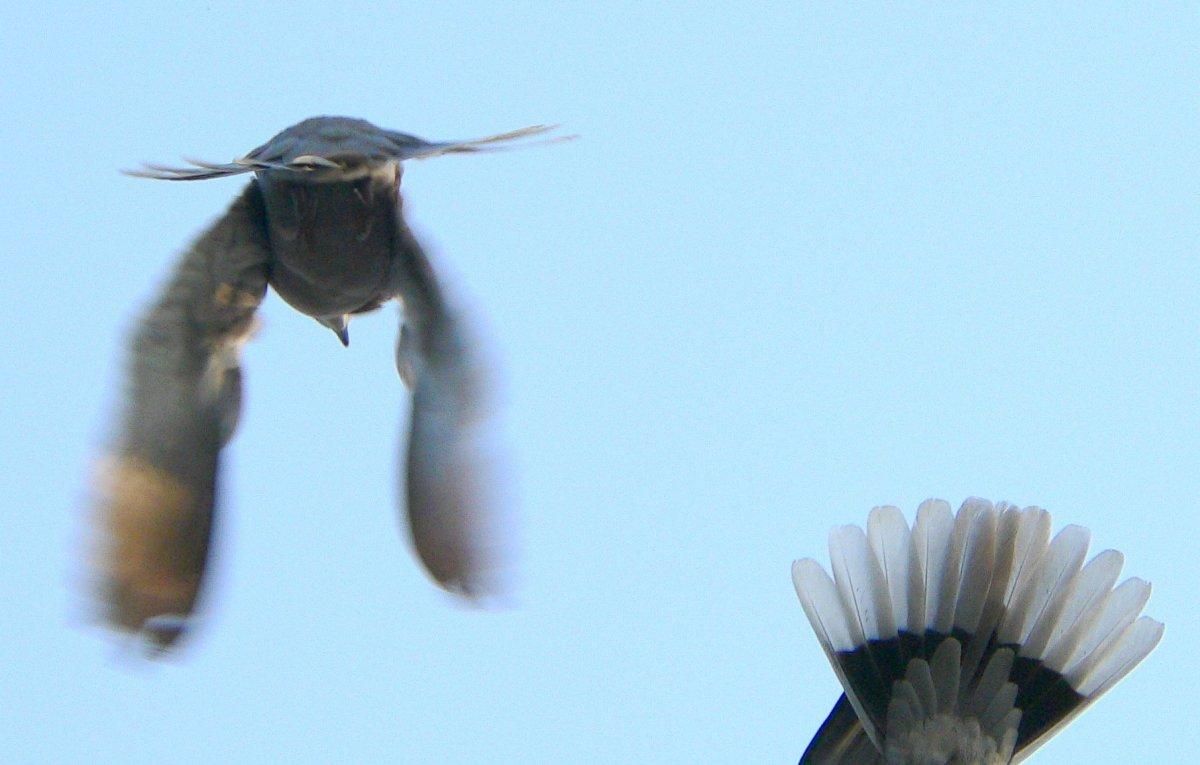 The birds fly away momentarily