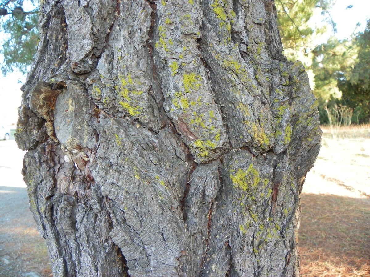 what-is-lichen