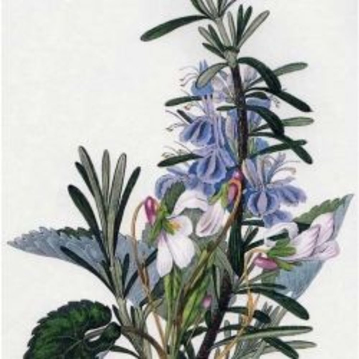 Botanical Art, Capturing The Beauty Of Nature