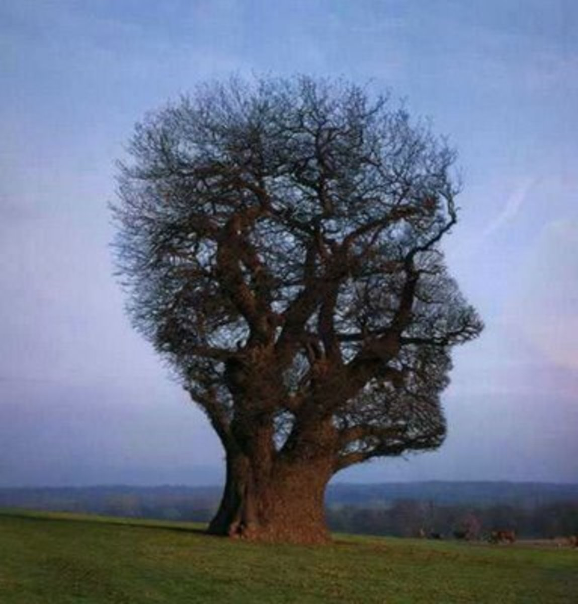 This tree forms an incredible  outline of a head!