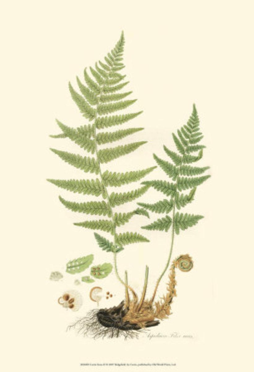 botanical-art