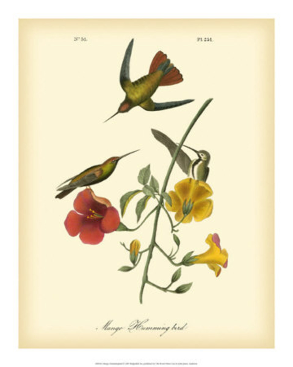 James Audubon also painted flowers and plants, along with his birds.