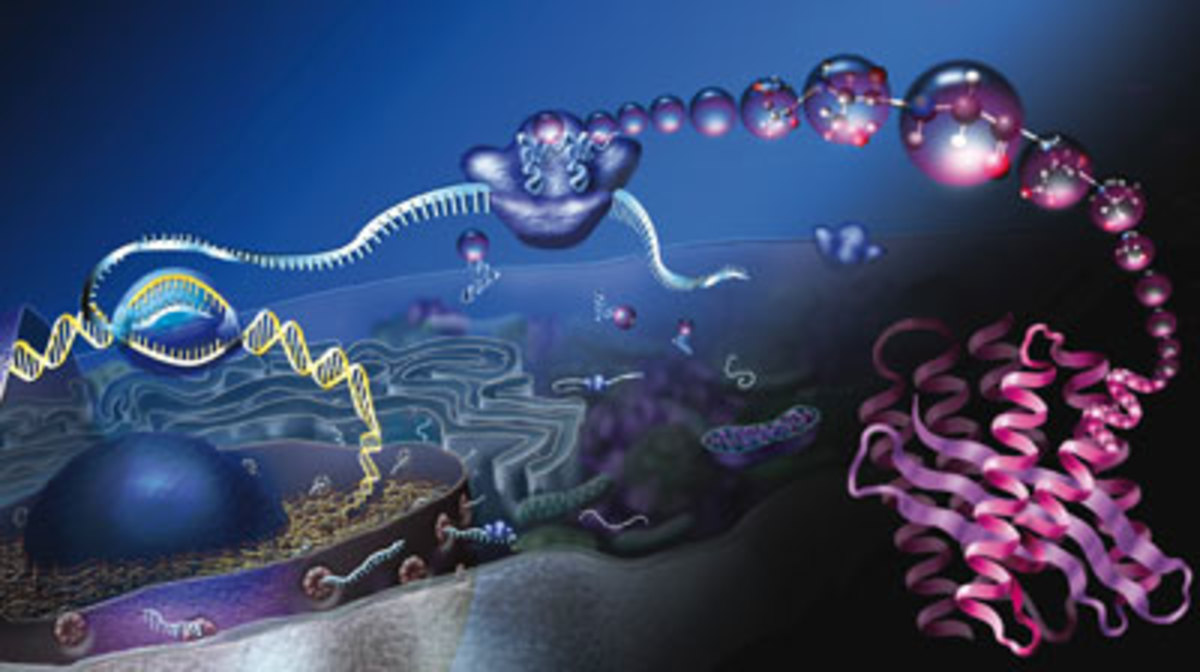 From DNA, to RNA, to Protein: the central dogma of molecular biology