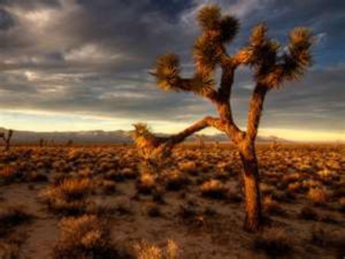 The Joshua Tree....Yes, this really is a national park!