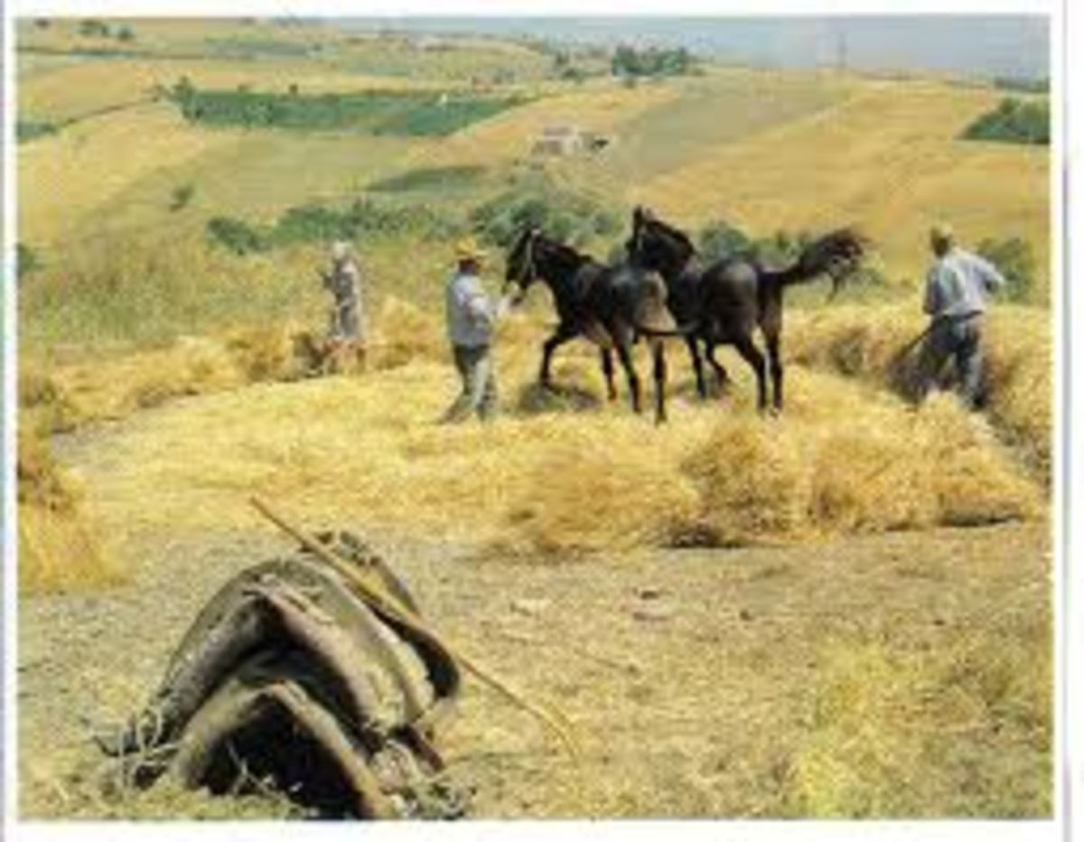Trashing with horses mules and any other animals that could be used. In order to trash wheat etc. you need to get the animals to trot around you in circle, while singing a lively tune, so that the animals could trot around you more easily