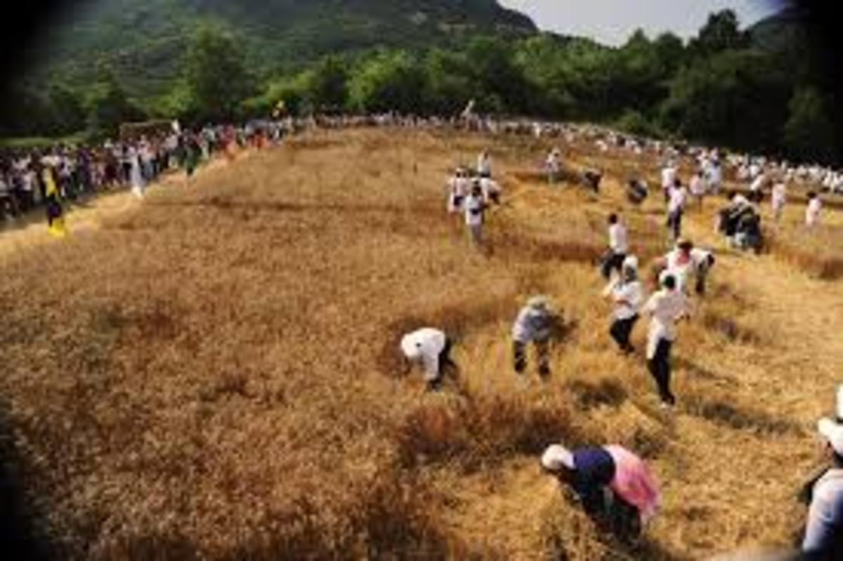 Just note how many people were needed to harvest a wheat field in the old days, this is one of the reasons why wheat was more expensive than today, it took a lot of work to collect the wheat.