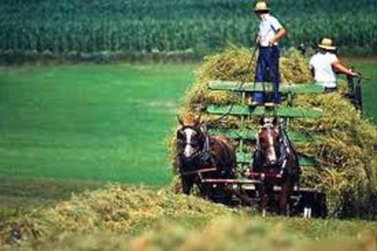 Horse drawn cart used mainly to carry hay or wheat bundles formed by the harvester machine