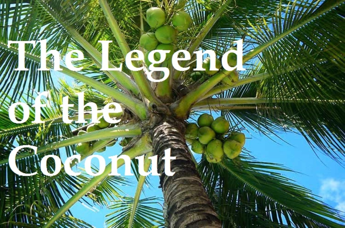 The Legend of the Coconut Tree