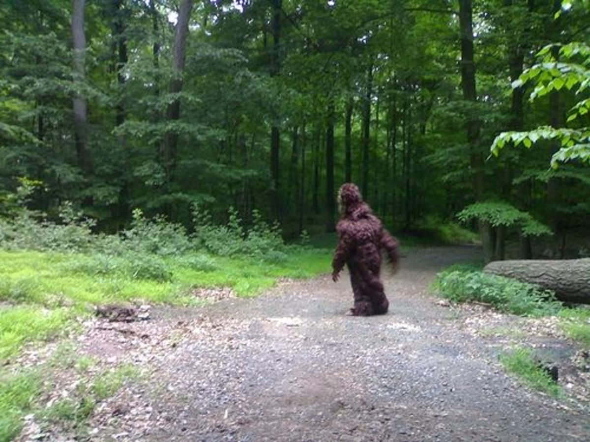Bigfoot on the Loose