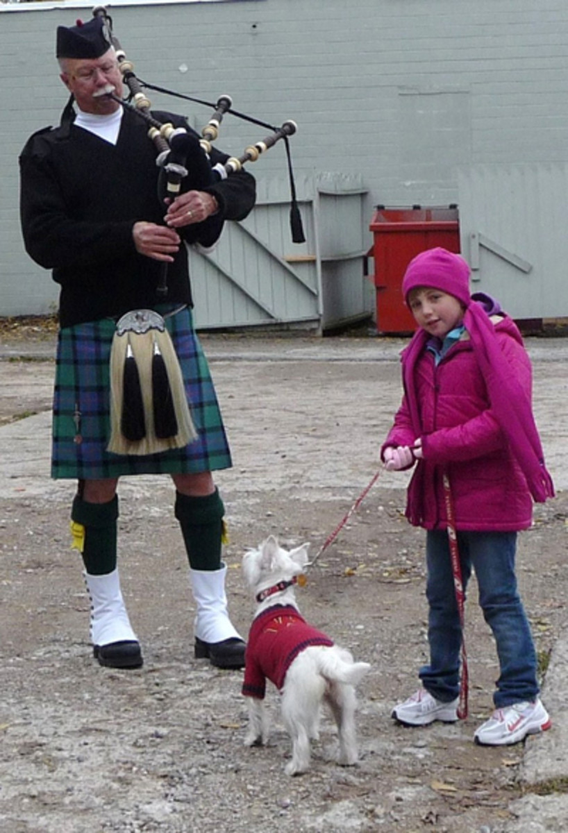 THIS WEST HIGHLAND TERRIER LOVES BAGPIPES, AND RIGHTFULLY SO
