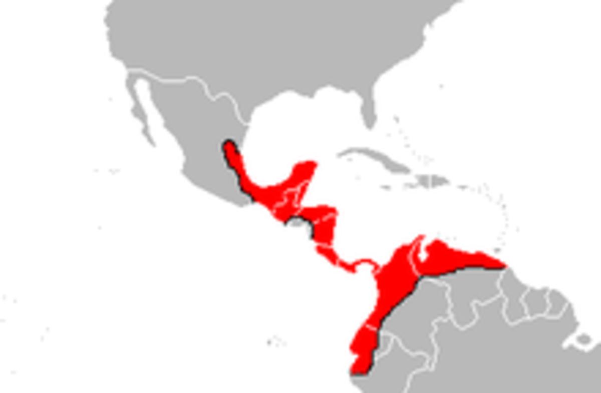 bothrops-asper-the-ultimate-pit-viper-an-exceedingly-venomous-snake