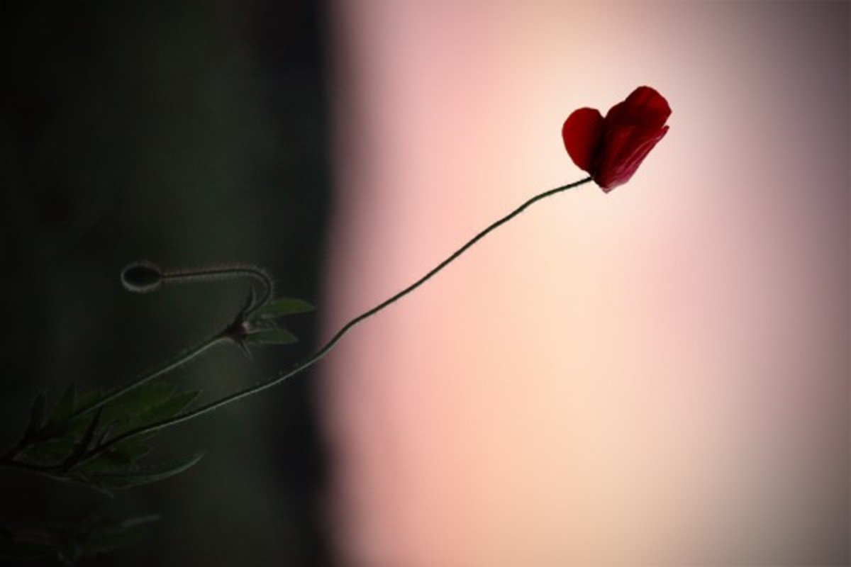 valentines-poems-6-a-simple-love-song