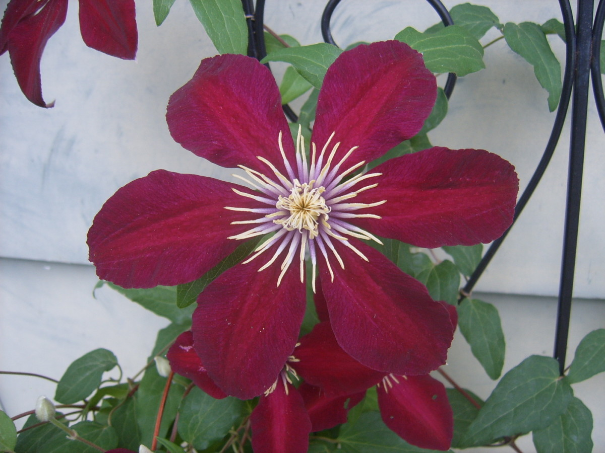 the-best-flowers-for-north-central-texas-no-fuss-gardens