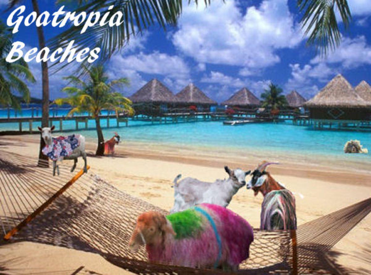Goatropia - Goats on The Beaches