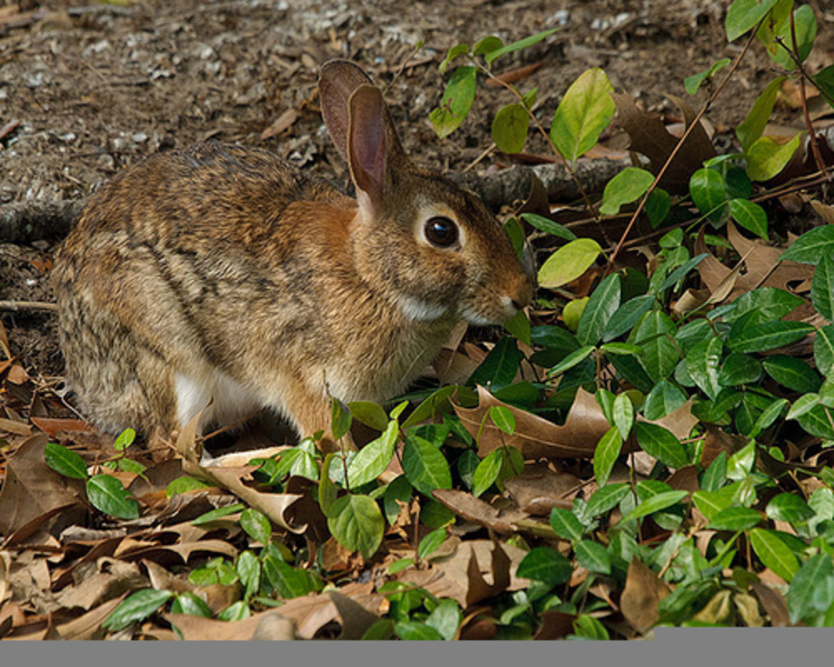 How to Deter Rabbits From Eating Your Garden