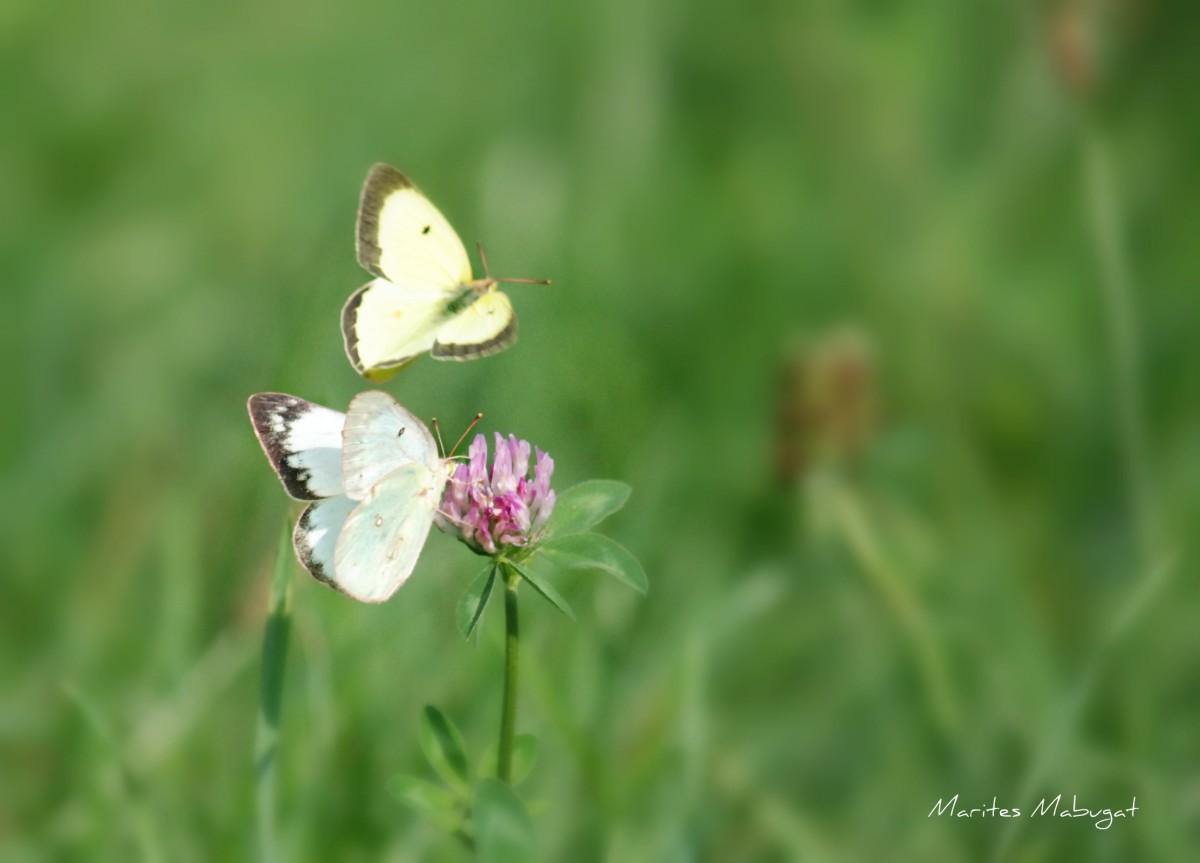 Playful faint shaded butterflies