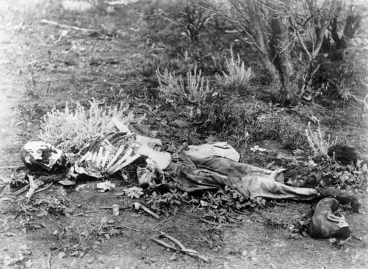 This image is a photograph of a human skeleton found lying in scrub in Western Australia, circa 1900-1910.
