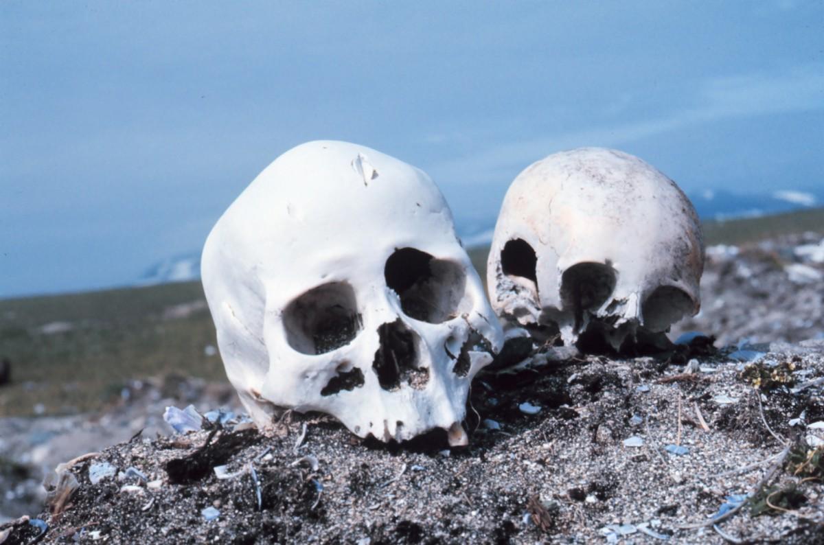Skulls on a Beach