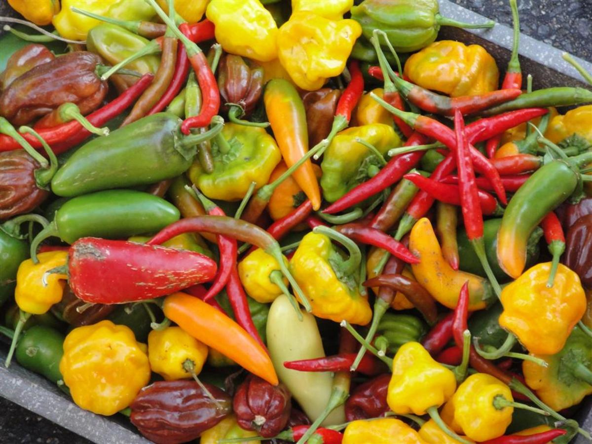 All hot peppers contain capsaicin, which is a  powerful stimulant.
