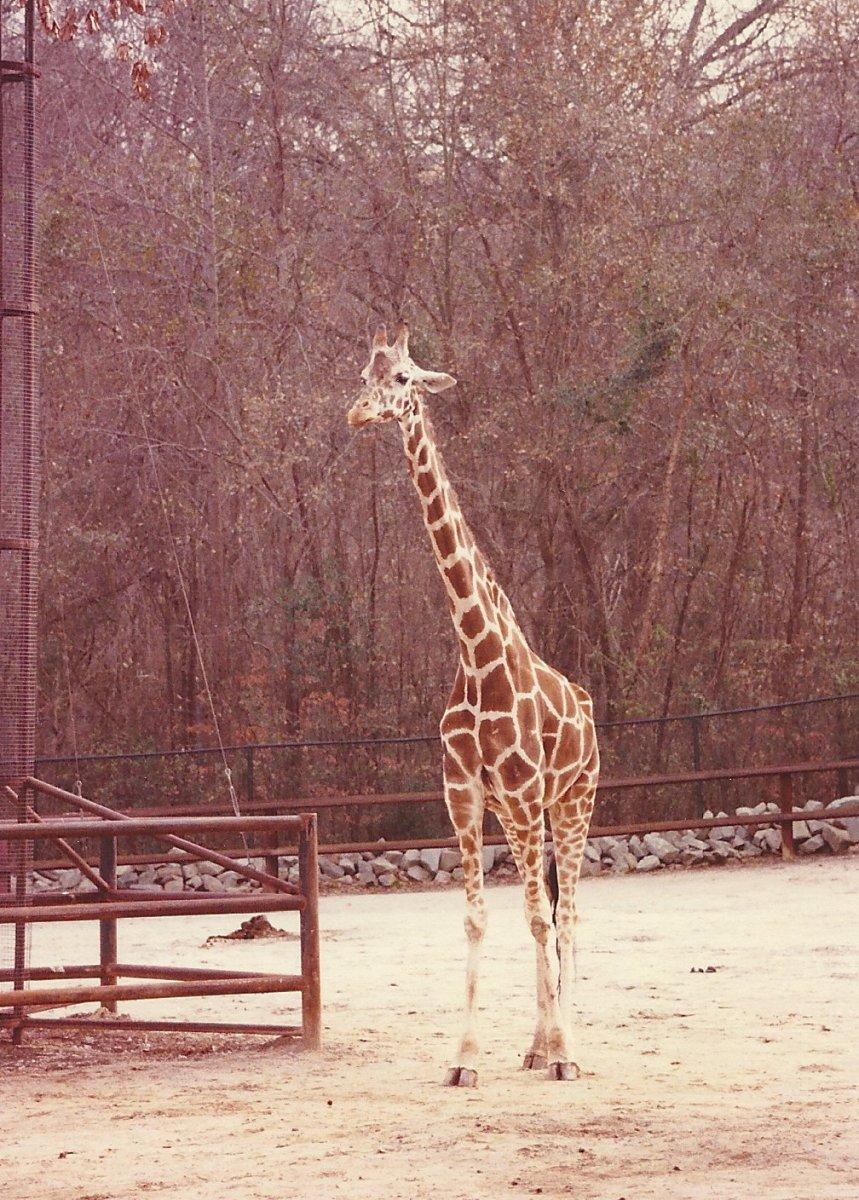 Consider a zoo trip