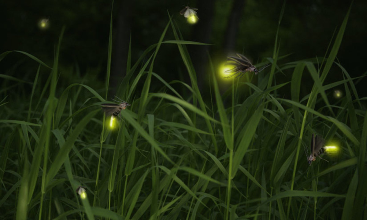 Tiny creatures as their light flickers at night lightning the grassland and trees.