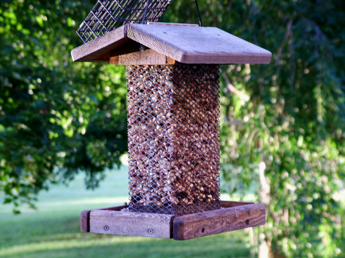 How To Build a Homemade Bird Feeder Web Camera