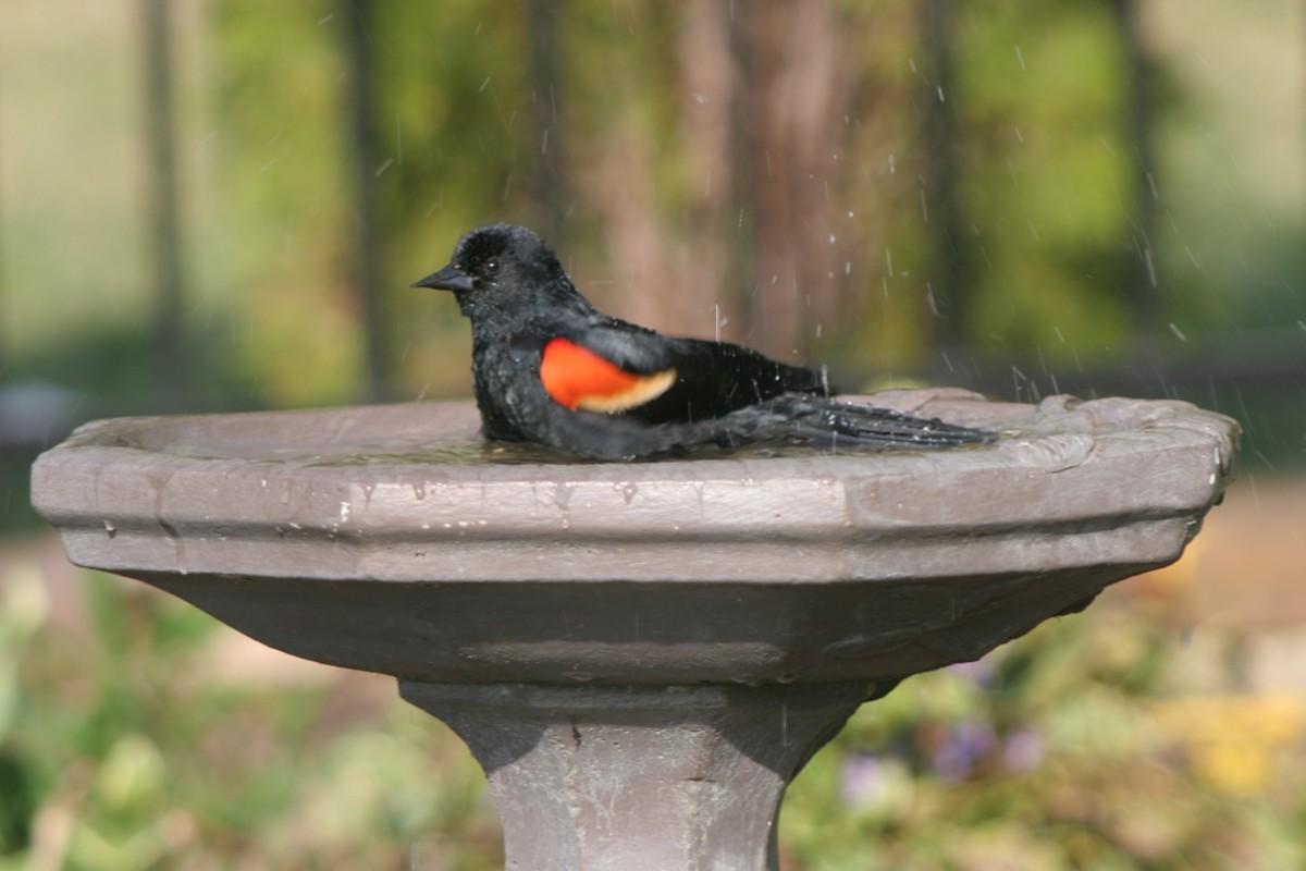 Homemade Bird Bath Drippers