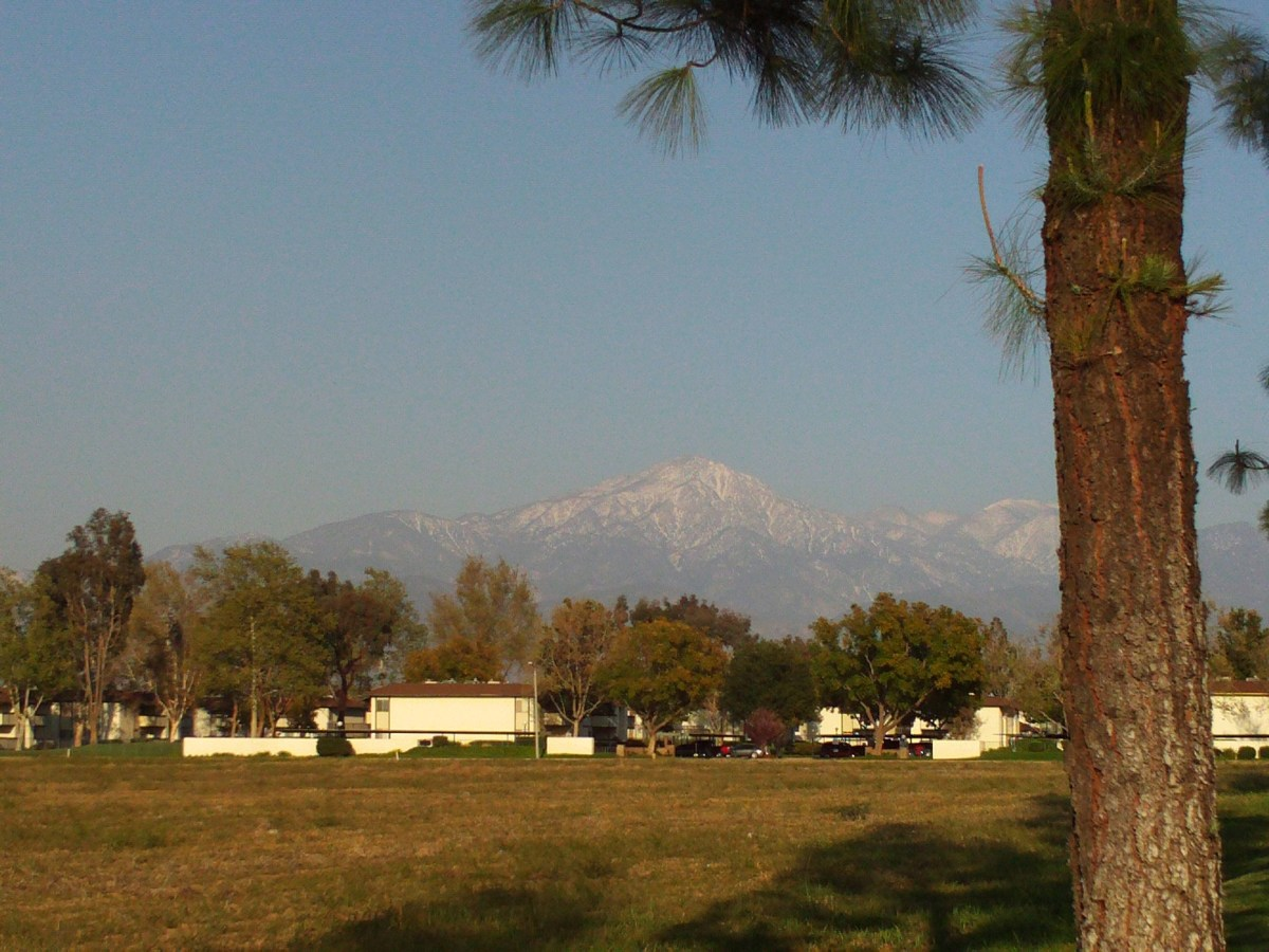 Mount San Gorgonio framed in snow and with a pine tree to the right.