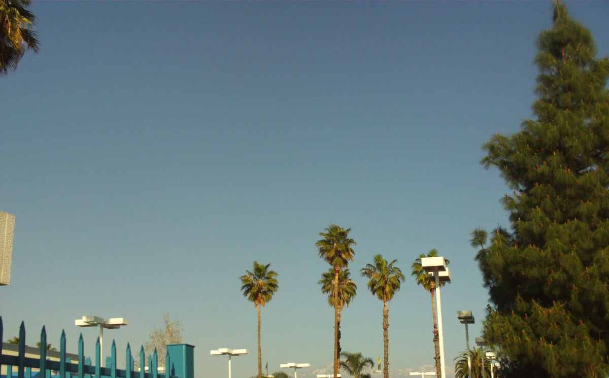 Palm trees reach great heights in Southern California.