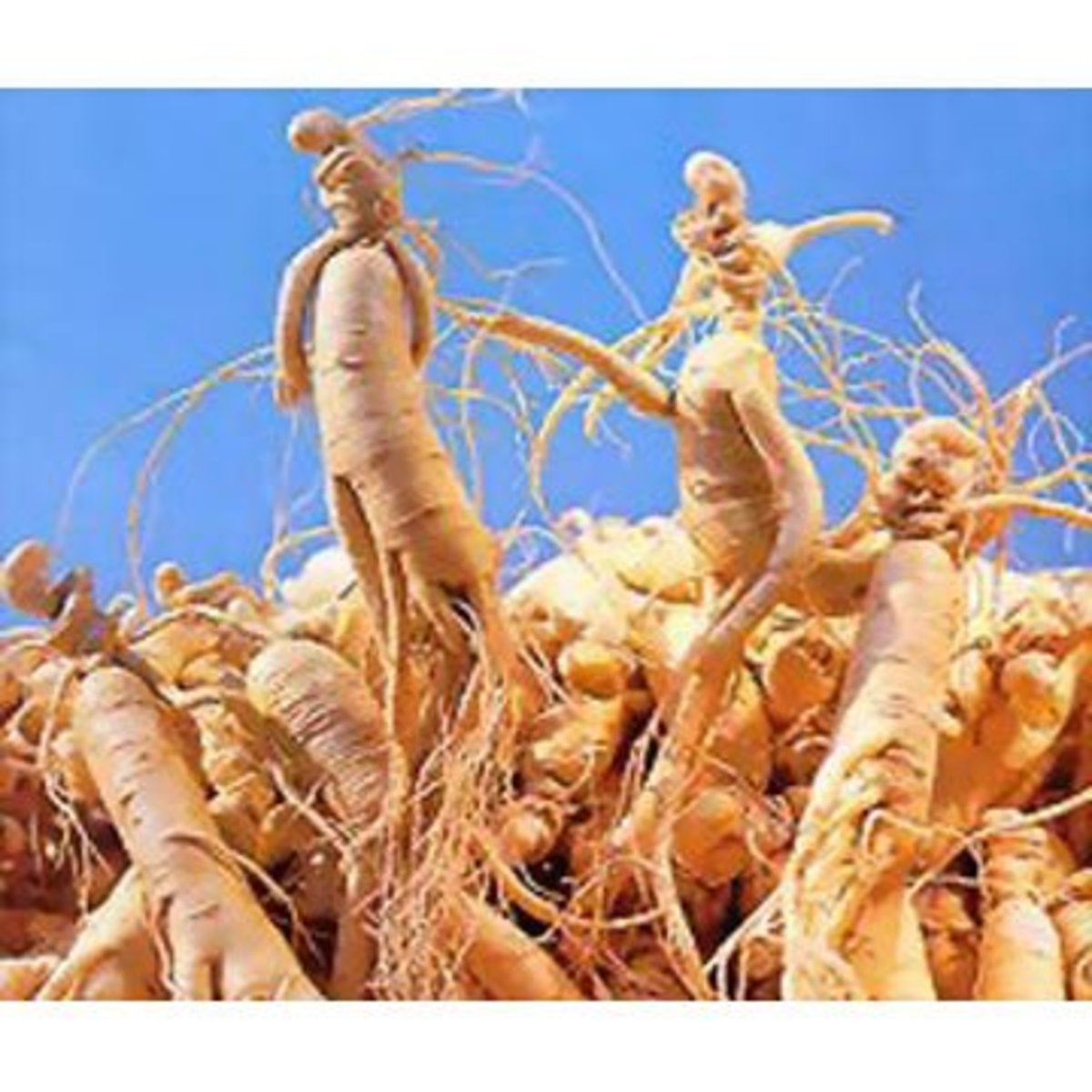 Avoid herbs such as gingseng root when taking clomid