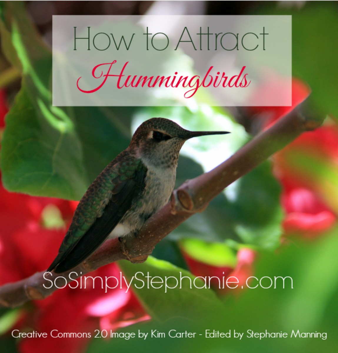Learn more about how to attract hummingbirds including how to create the perfect environment, water supply and more.